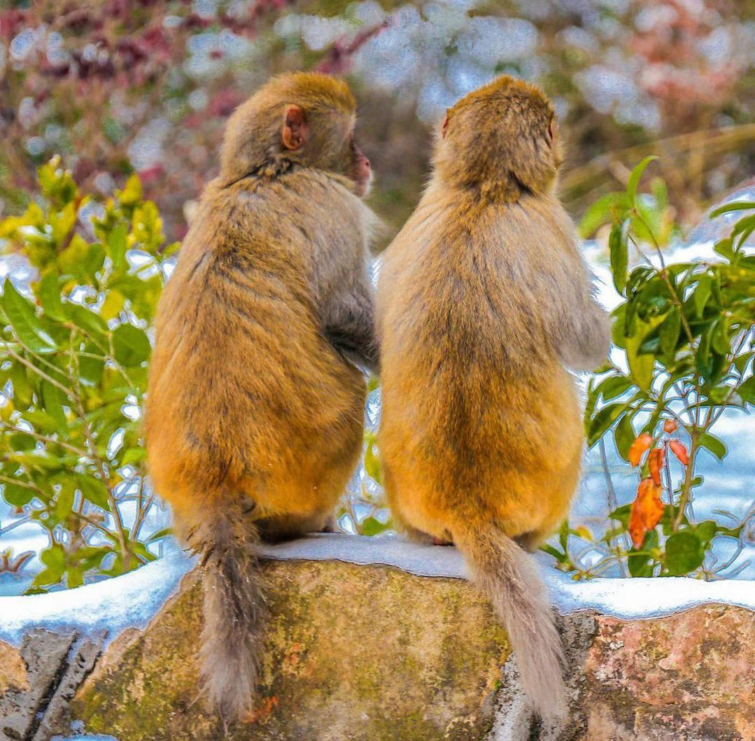 森林公园猴子